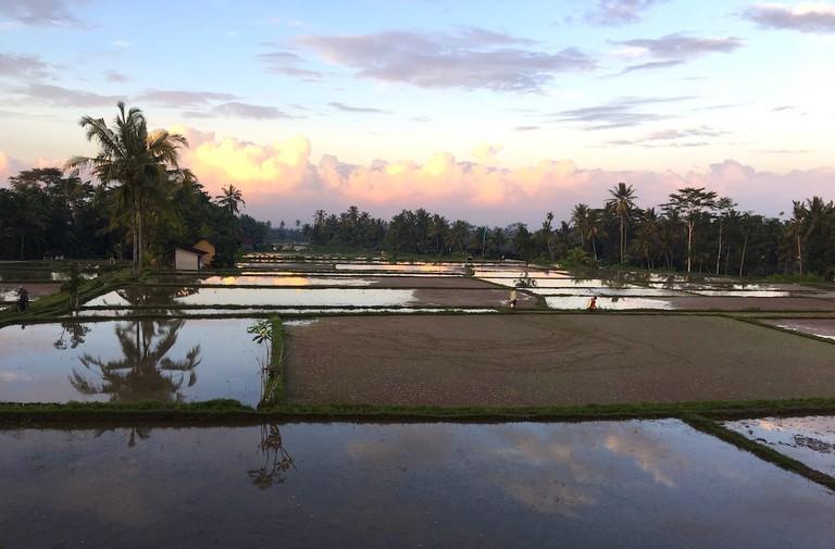 Ubud's rice paddies | © Esme Benjamin/Culture Trip