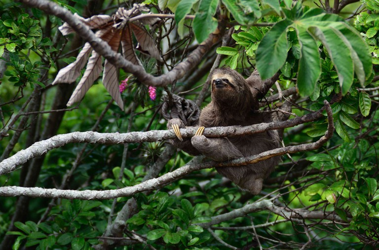 Leave animals like sloths in the wild and avoid being arrested
