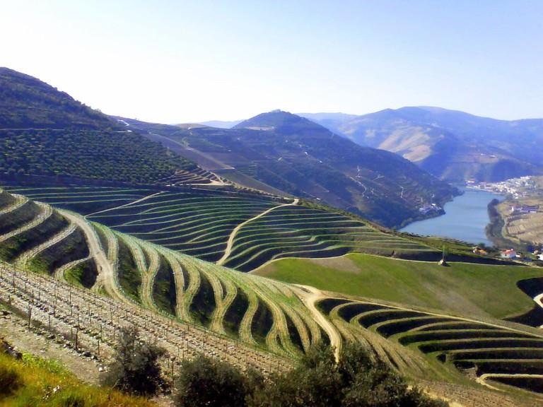 https://pt.wikipedia.org/wiki/Vinhos_portugueses#/media/File:Oporto_terraced_vineyards.jpg