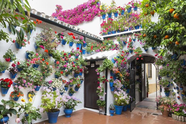 One of Córdoba's stunning decorated patios I