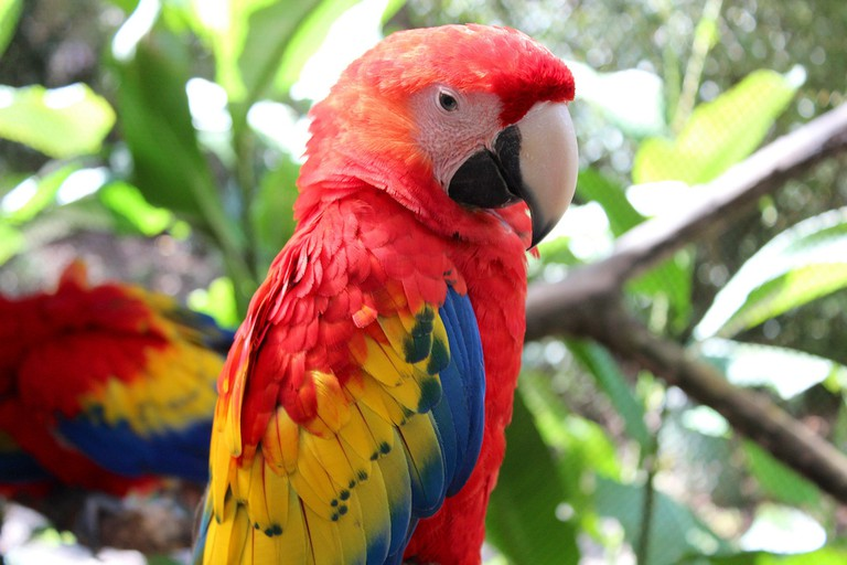 Be peaceful like the parrots