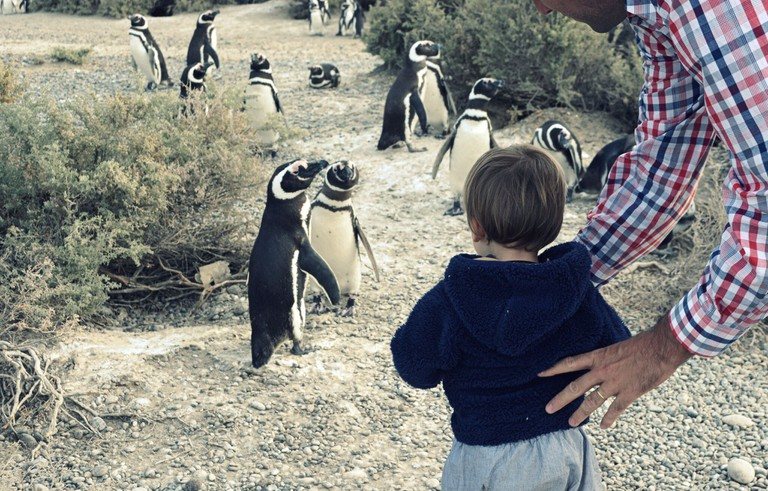 Kids visiting a penguin colony during an El Pedral program