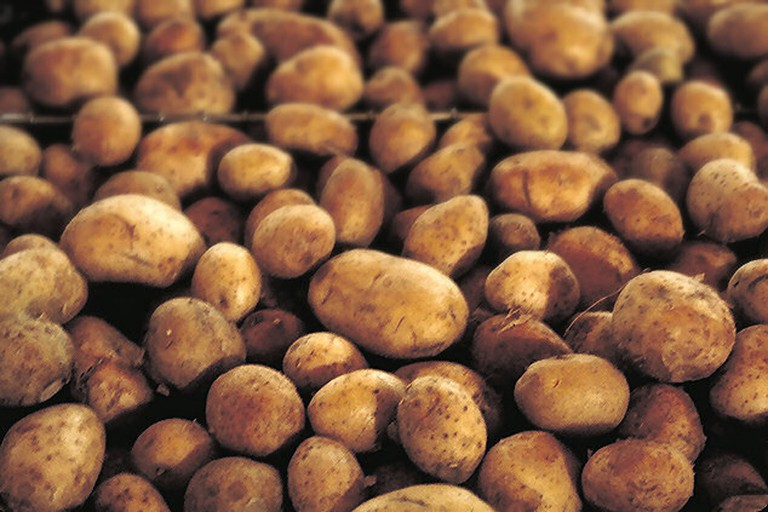 Potatoes were once only eaten by animals