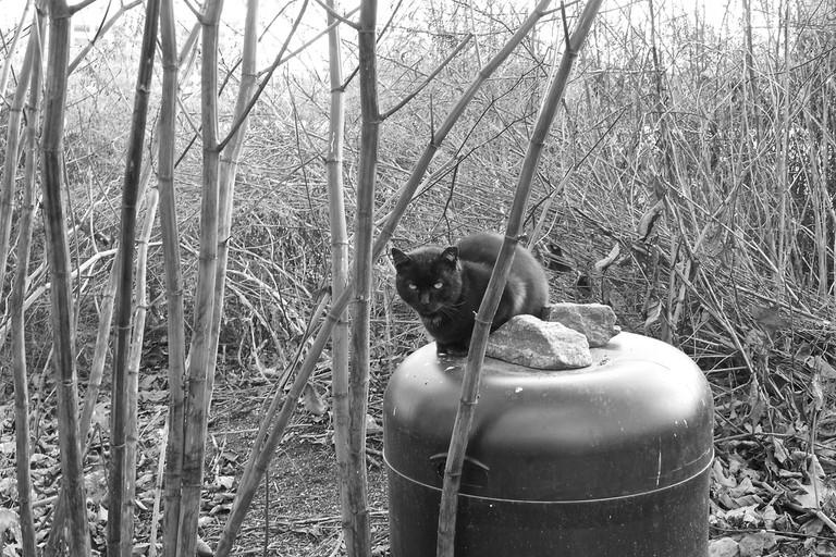 Roosevelt Island Cat Sanctuary