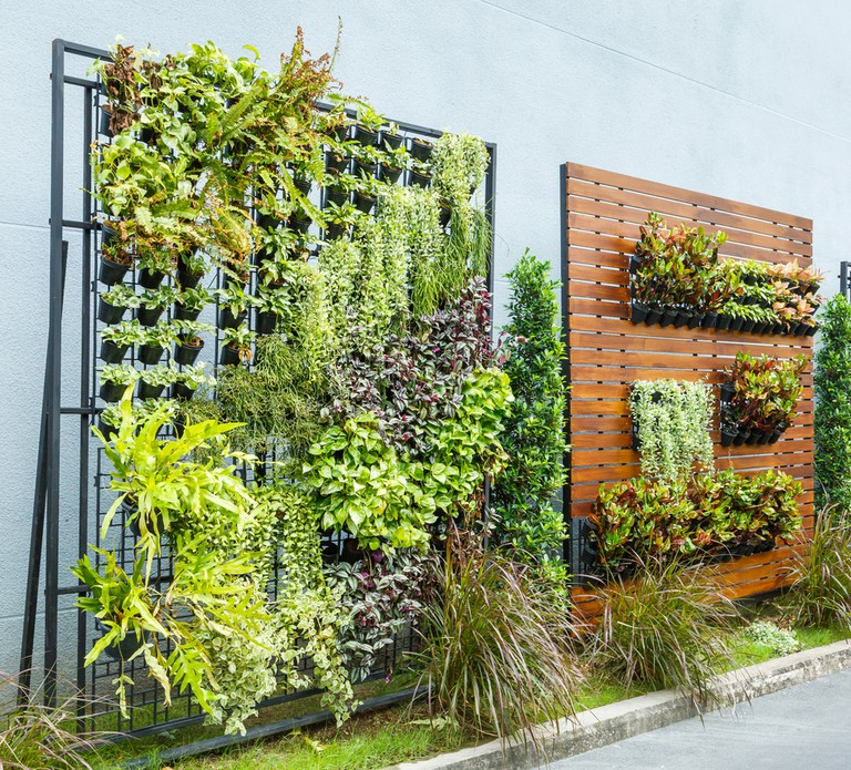 Vertical garden in office space