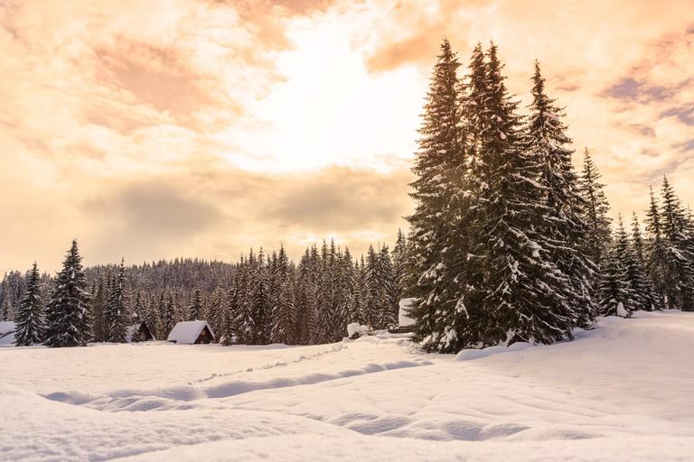 Vogel in the Winter│