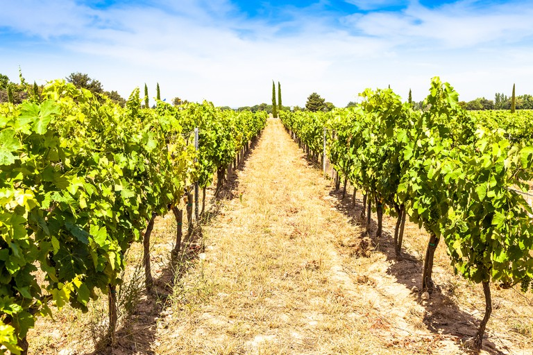 Provence has a wine to suit every dish you can find