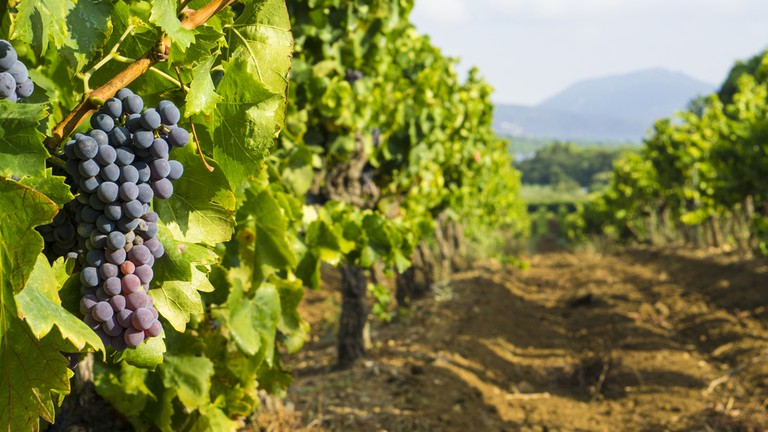 Everywhere you go in Provence, you can see stunning vineyards