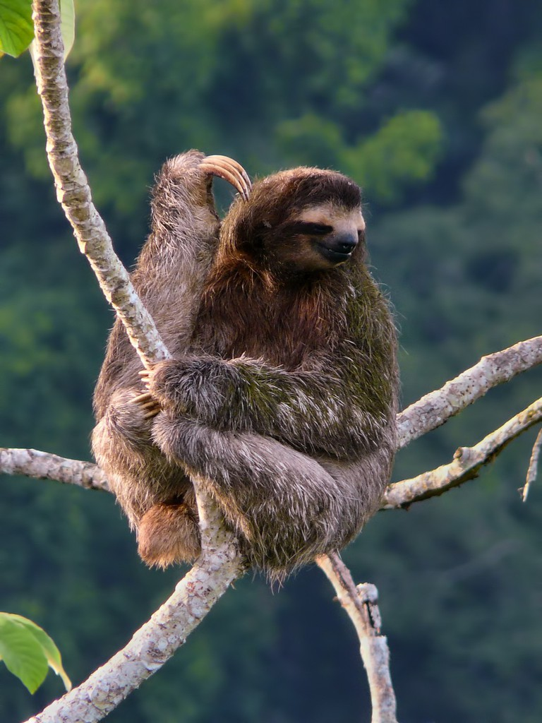 Doing what sloths do best