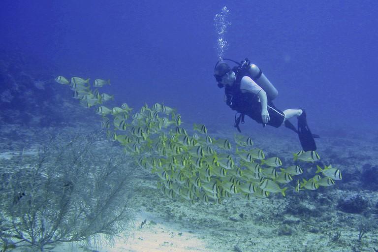 Diving south of Playa del Carmen