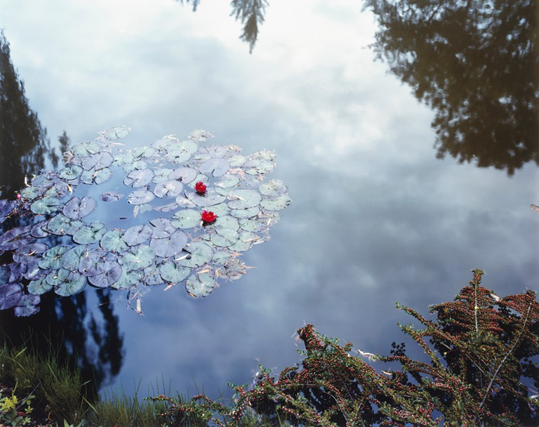 Stephen Shore, Waterlilies, (from The Giverny Portfolio), 1977–83
