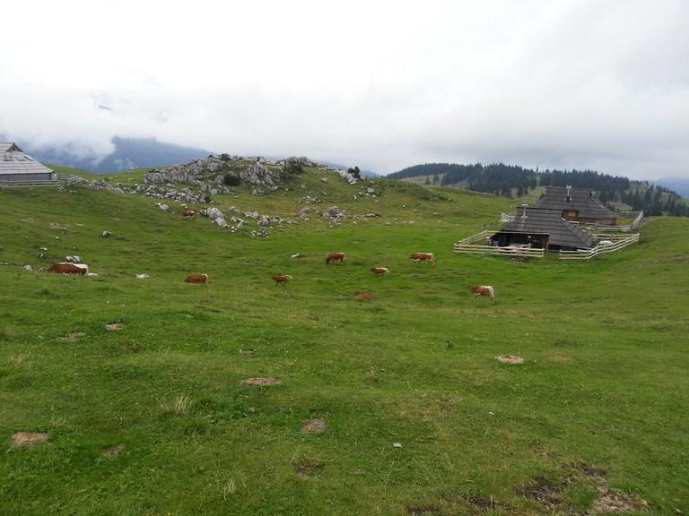 Velika Planina plateau│