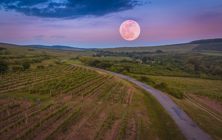 Moon over Tokaj Vineyards