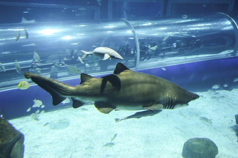 The aquarium |©Fernando Maia | Riotur;Flickr