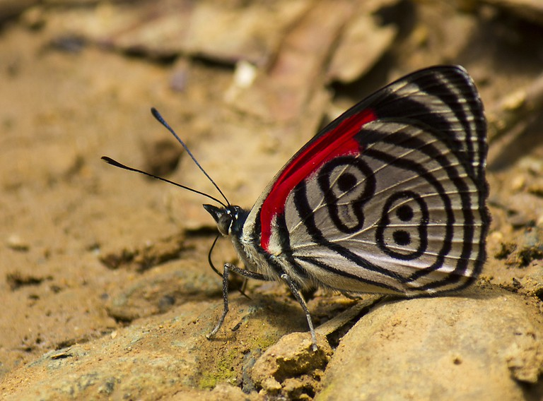 A beautiful 89'98 butterfly in Colombia