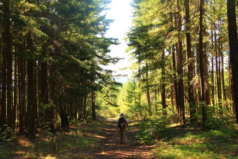 Mount Hood National Forest I