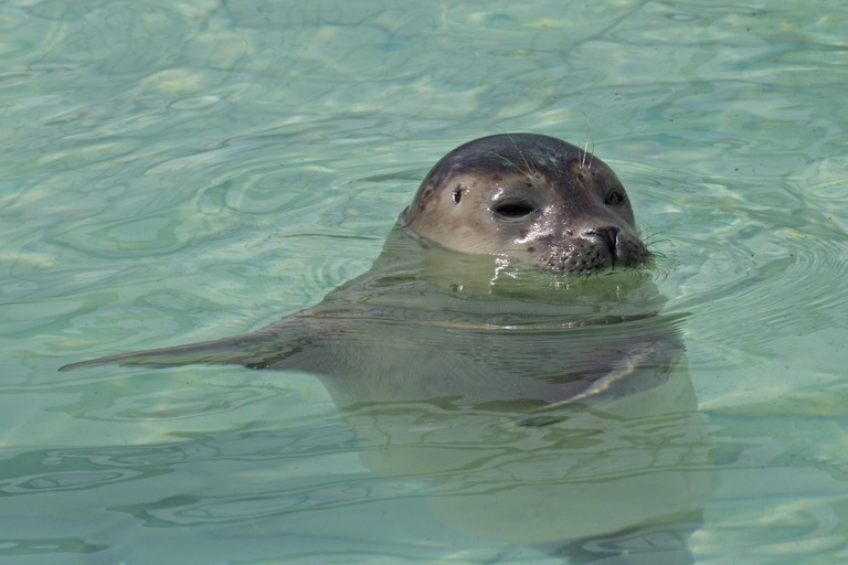 A seal at Pieterburen's research and rehabilitation centre