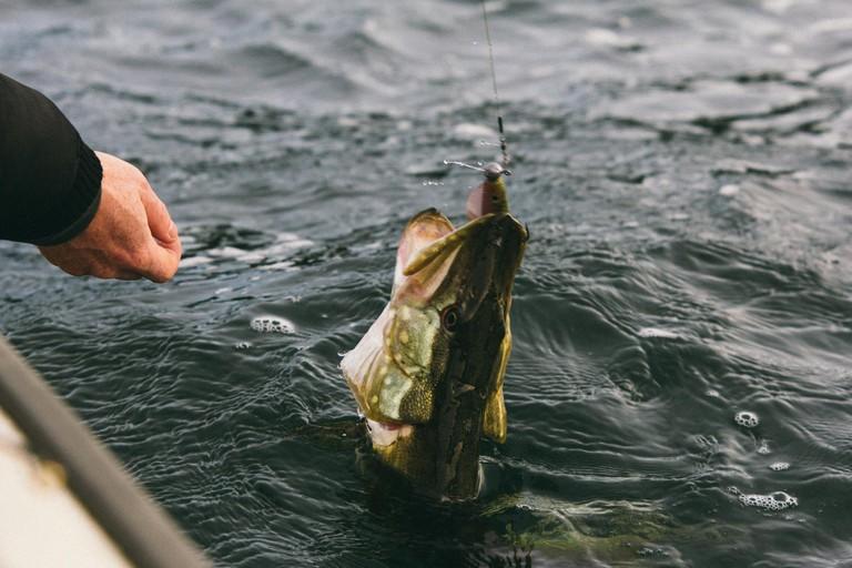 Pike caught at Åland / Benjamin Horn / Flickr