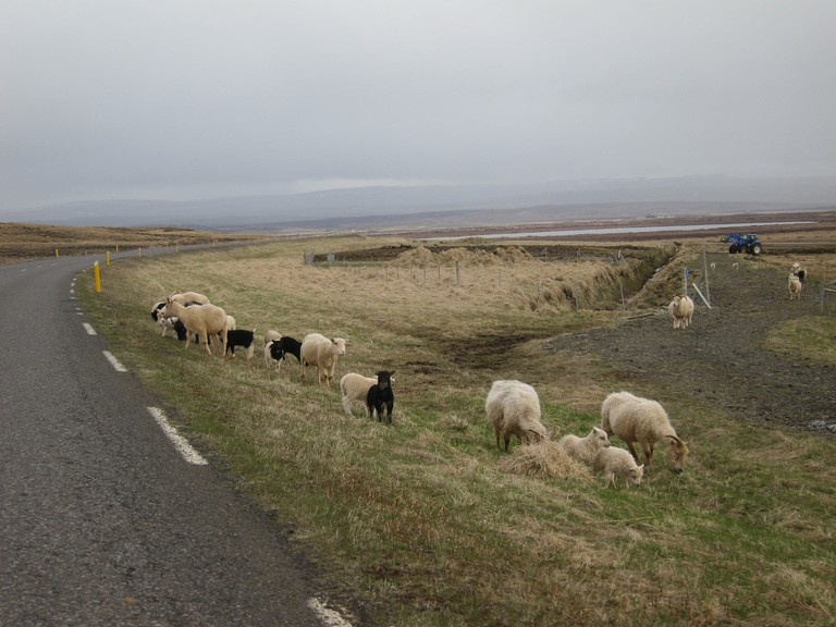 Ubiquitous farm scene on the way to Gullfoss | © Kirk Y./Flickr