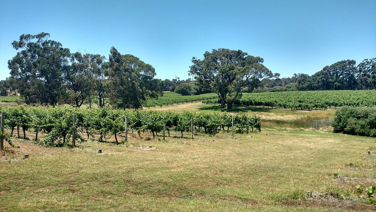 2016 Margaret River Australia. Hay shed hill winery 2