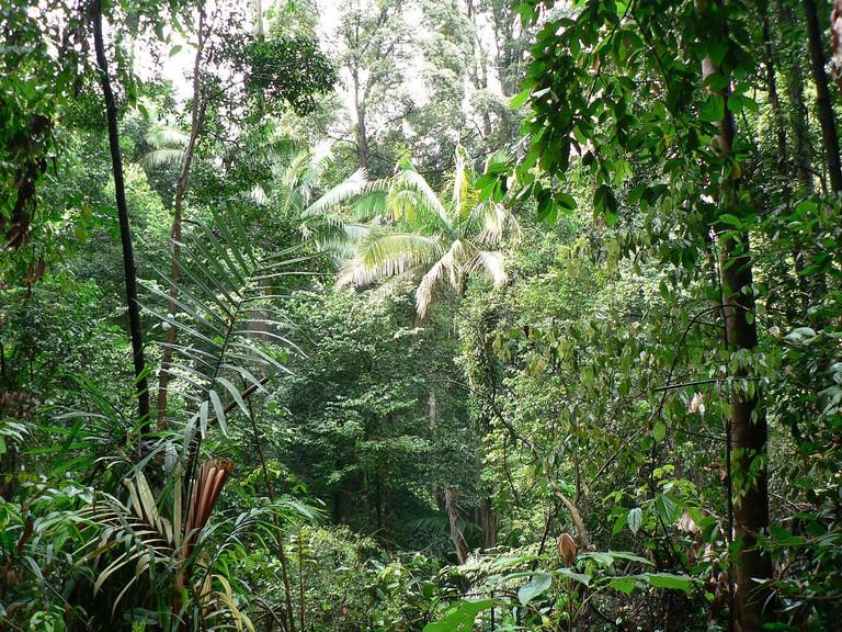 Bukit Timah Nature Reserve | © Marinus van Opzeeland / Flickr