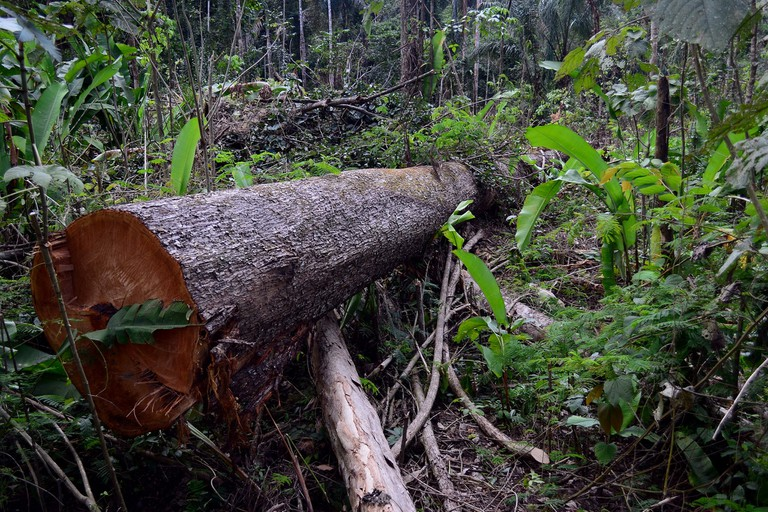 Illegal logging in Jamanxim National Forest, Brazil