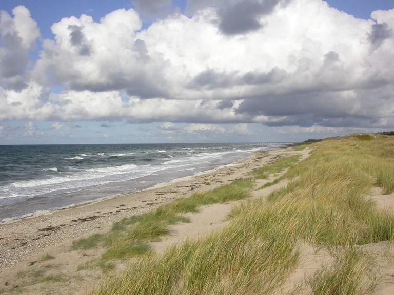 Wild and free beaching