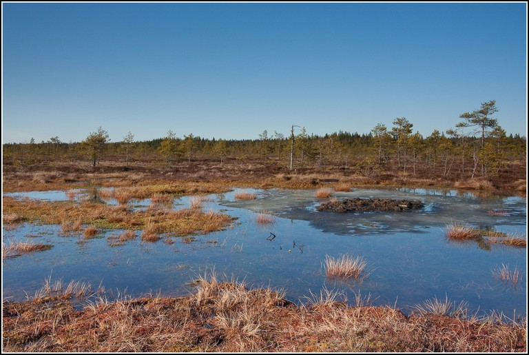 Torronsuo National Park / Pekka Vainio / Flickr