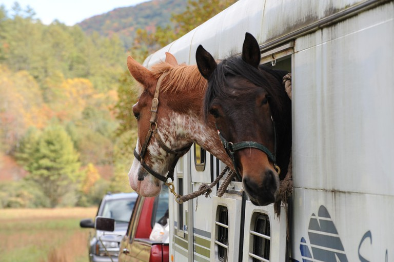 Horses in Cataloochee Valley, Great Smoky Mountains National Park