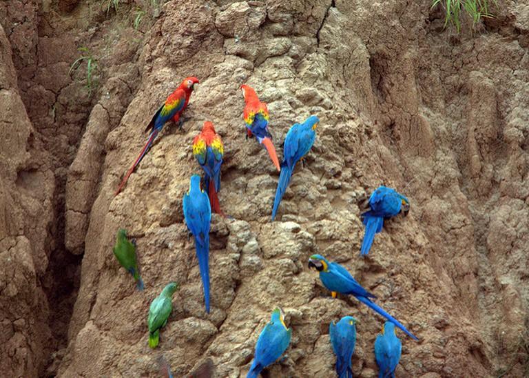 Colorful birdlife I