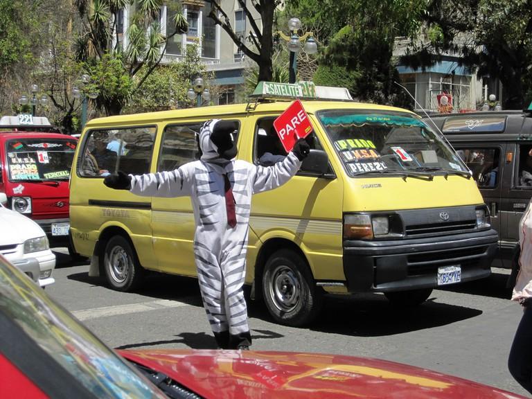 Zebra in La Paz