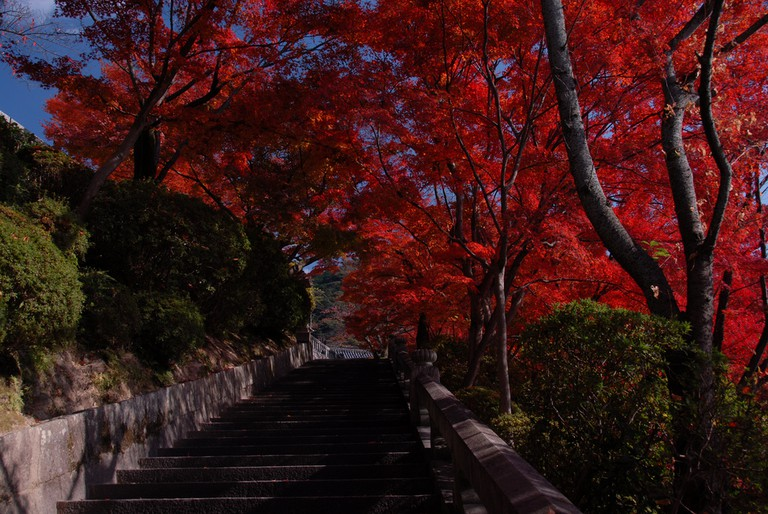 Kyoto fall colors
