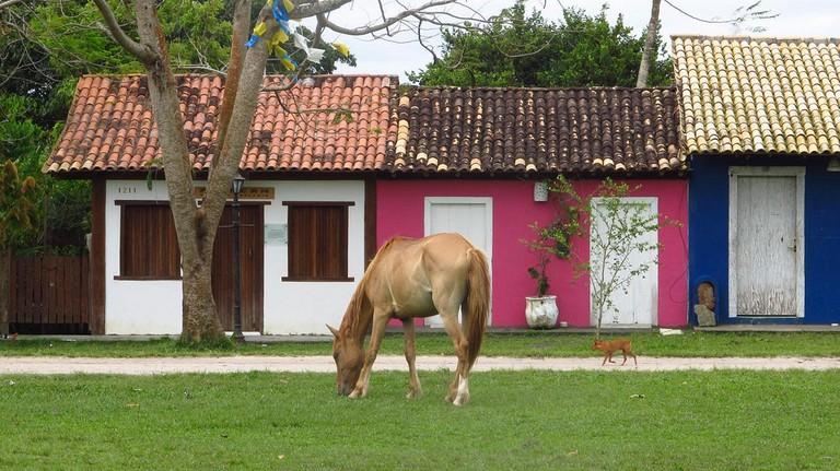 Animals on the Quadrado, Trancoso