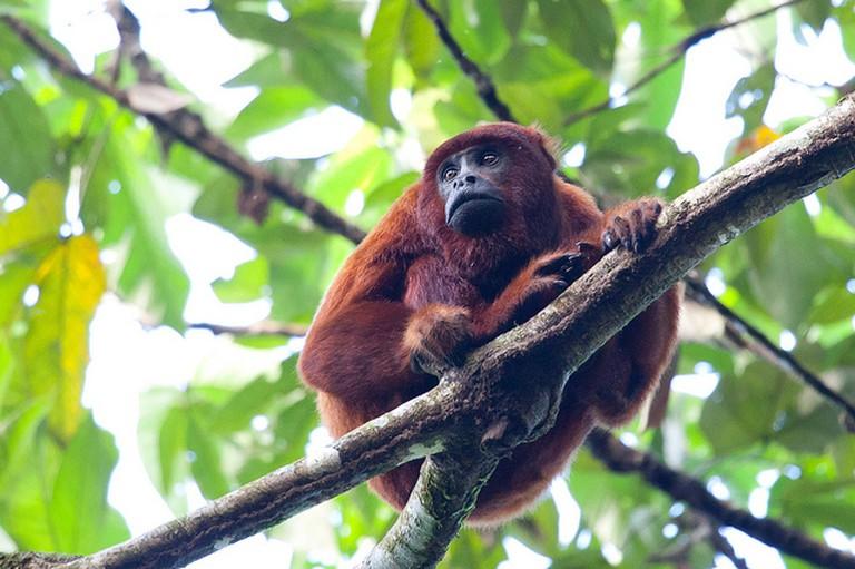 Check out Peru's wildlife I