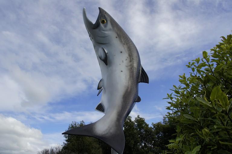 The Salmon in Rakaia