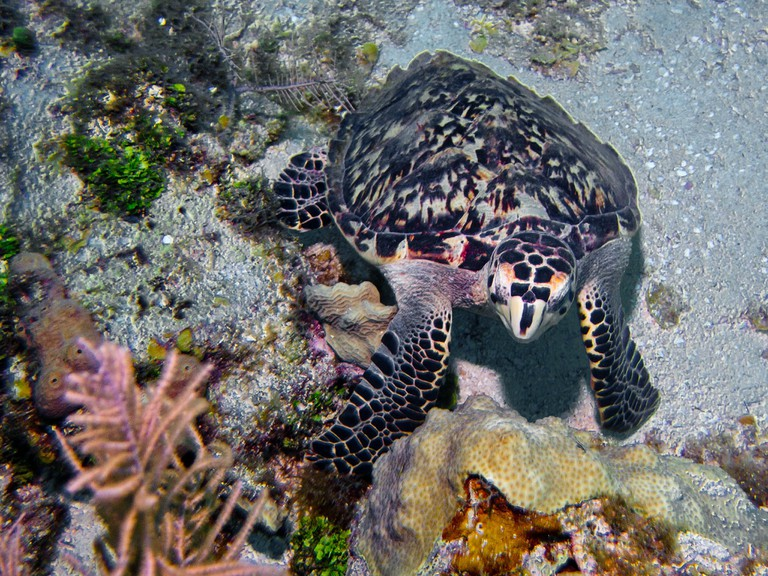 Getting up close and personal with a sea turtle on a dive in San Andres I