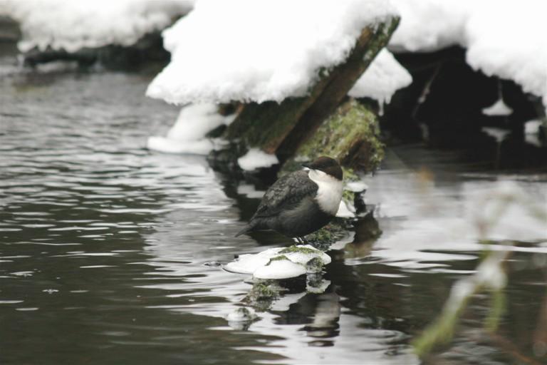 A bird at Nuuksio during winter / /kallu / Flickr