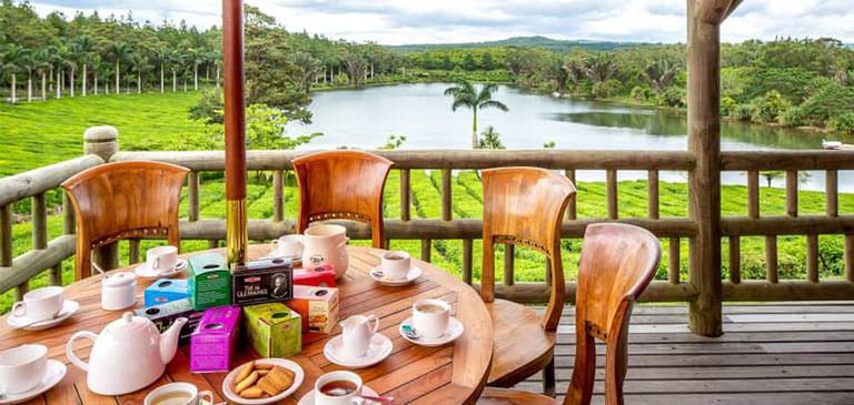 A tea-tasting experience at Bois Cheri Tea Estate