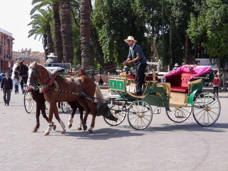 Calleche in Marrakech