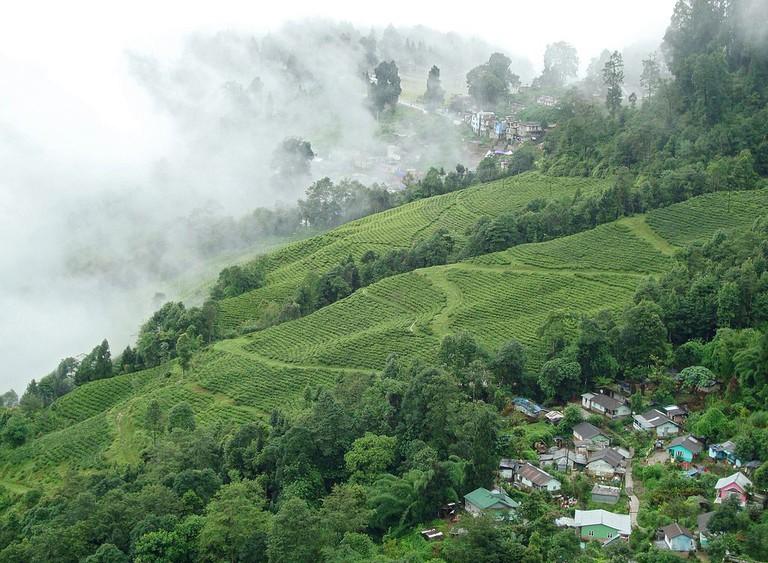 Lush Tea Gardens on the way from Darjeeling to Pelling | © Joydeep / Wikimedia Commons