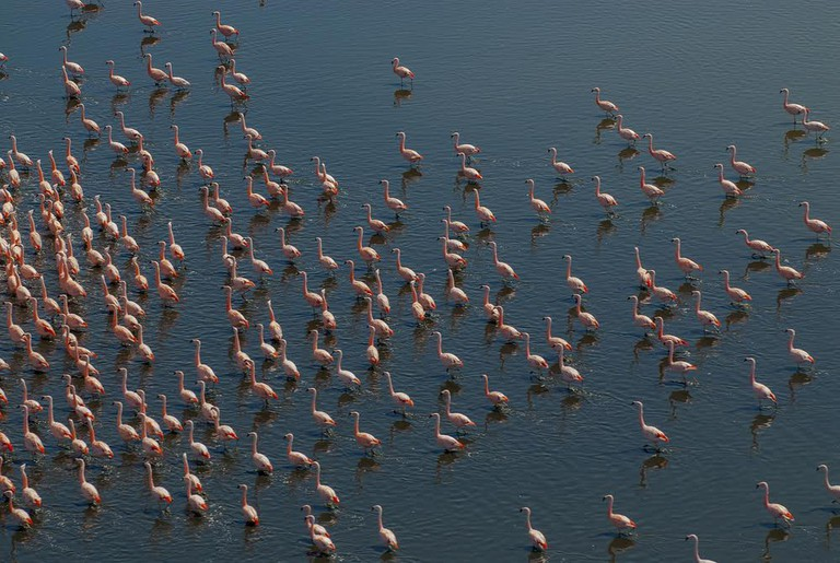 Flamingos in La Pampa