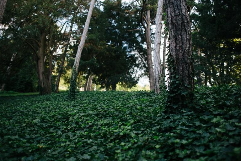 Forest at Parc des Buttes Chaumont │Caroline Peyronel / © Culture Trip