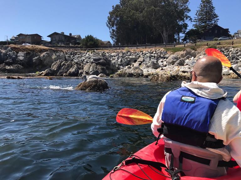 Seal spotting in Monterey