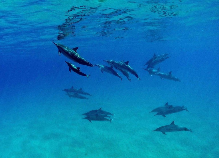 Swimming with dolphins in Waiʻanae