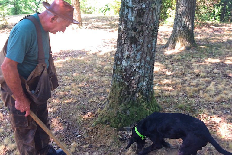 Sniffing out and digging up a black truffle