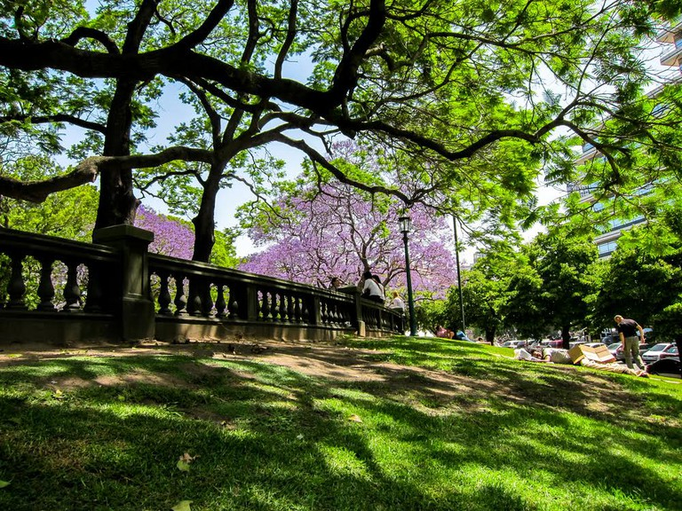 Jacaranda trees in full bloom on Plaza San Martin in Buenos Aires