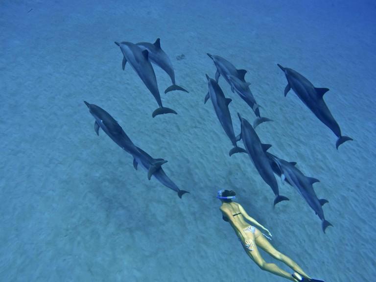 Swimming with dolphins on the west side of Oahu