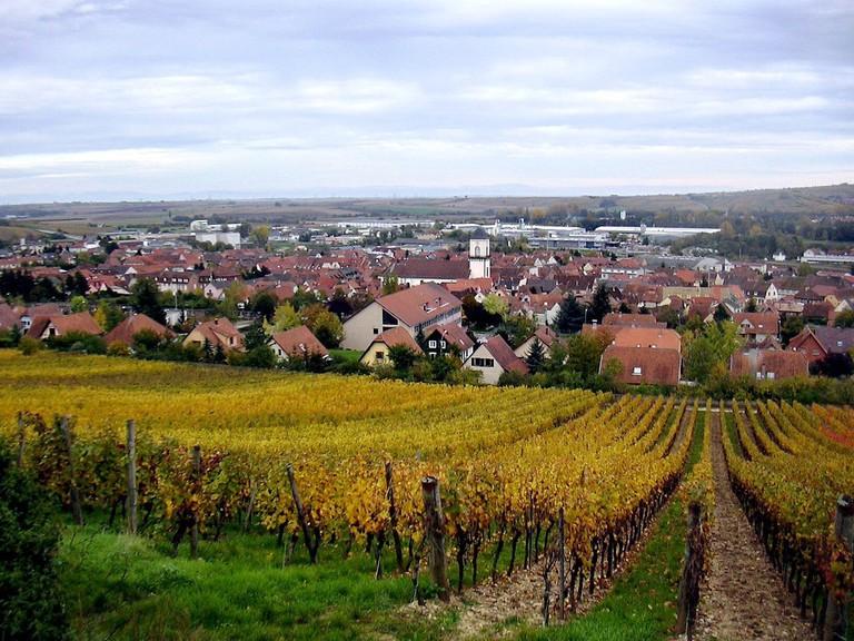Marlenheim vineyards