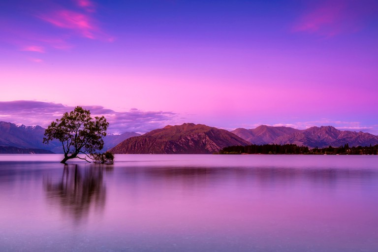 Lone tree in Lake Wanaka