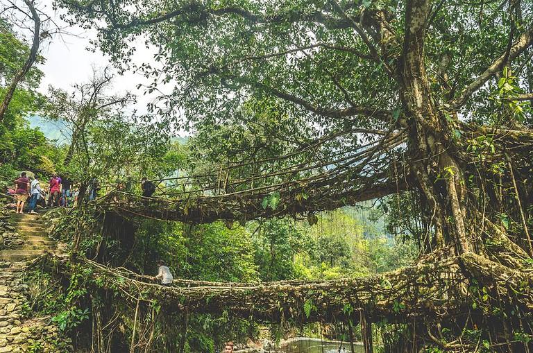 Double Decker Living Root Bridge in Nongriat Village | © Sai Avinash / Wikimedia Commons